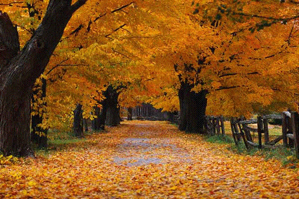 and fall lawn and landscape cleanup services by